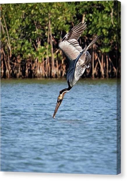 Pelican Dive Canvas Print
