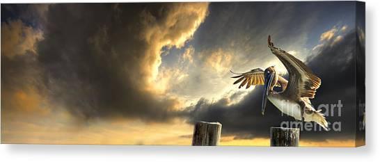 Pelican Evening Canvas Print