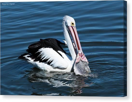 Pelican Fishing 6661 Canvas Print