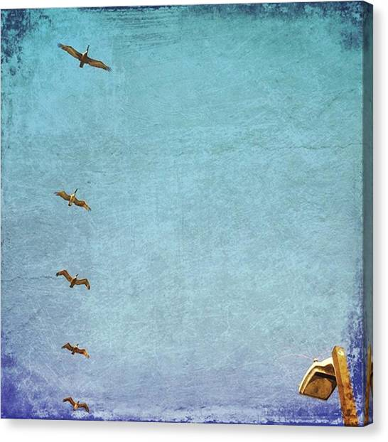 Large Birds Canvas Print - Pelican Fly Over #gulfshoresalabama by Joan McCool