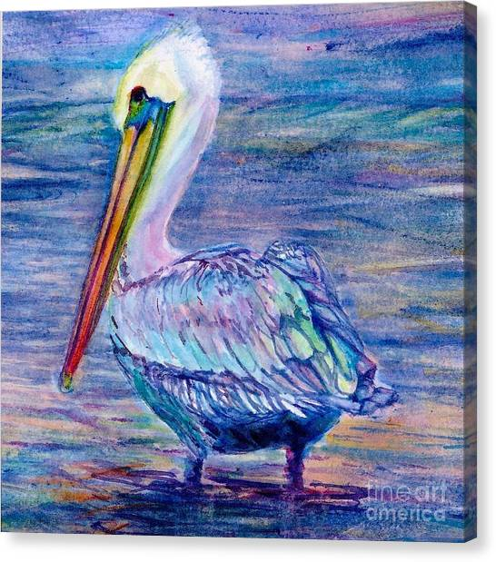 Pelican Gaze Canvas Print