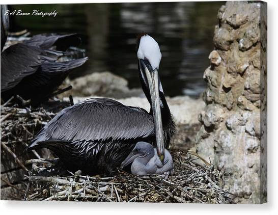 Pelican Hug Canvas Print