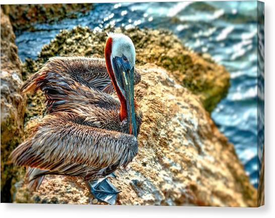 Pelican II Canvas Print