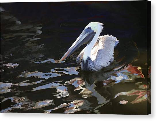 Pelican II Oil Painting Canvas Print
