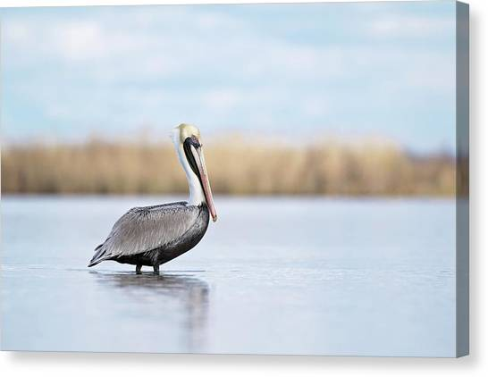 Pelican In Paradise Canvas Print