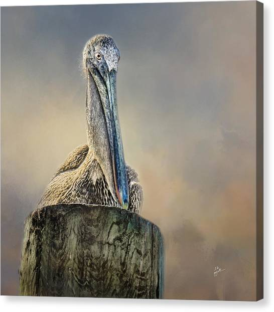 Pelican In Paradise Squared Canvas Print