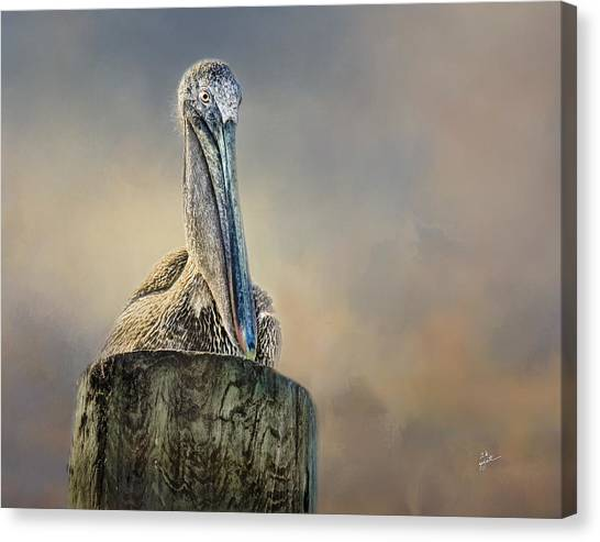 Pelican In Paradise Canvas Print