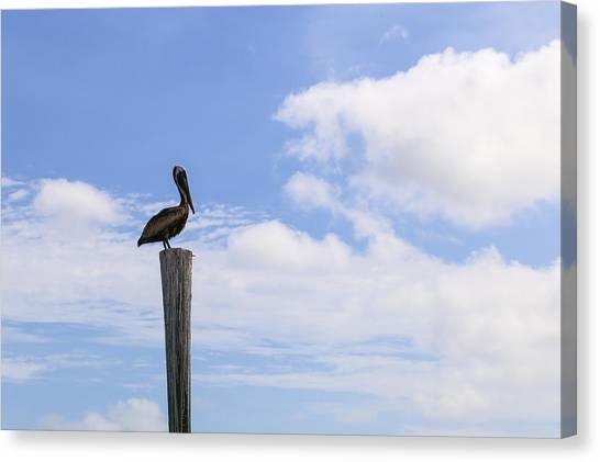 Pelican In The Clouds Canvas Print