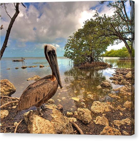 Pelican In The Florida Keys Canvas Print
