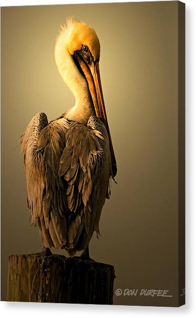 Canvas Print - Pelican On Piling by Don Durfee