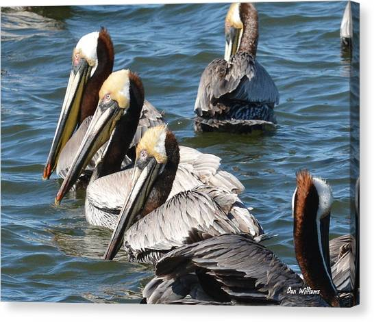 Pelican Profiles Canvas Print