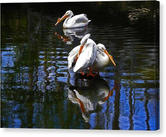 Pelican Reflections Canvas Print