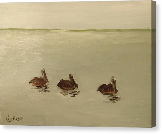 Pelican Study 1 Canvas Print by Liz Rose