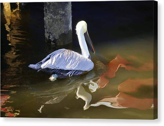 Pelican Swim II Canvas Print