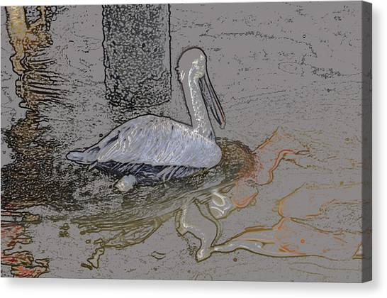 Pelican Swim IIi Color Pencil Canvas Print