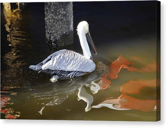 Pelican Swim Canvas Print