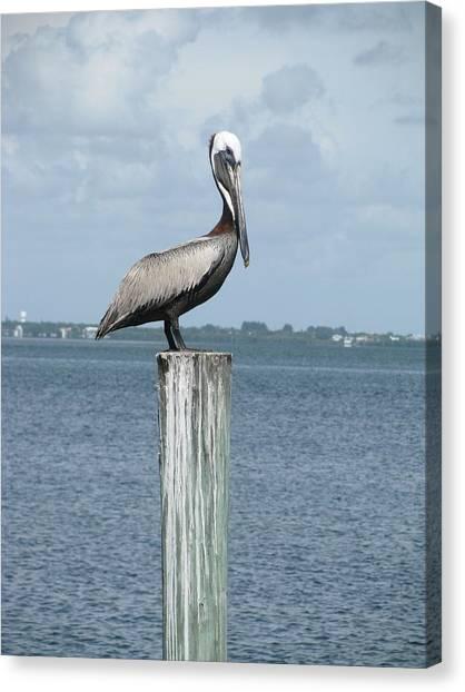Pelican Canvas Print by Trisha Dahm