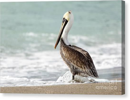 Pelican Waves Canvas Print