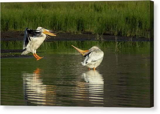 Pelicans 2 Canvas Print