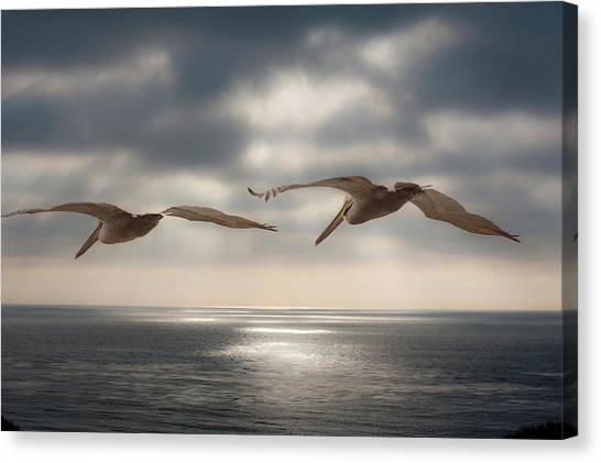 Pelicans At Sea Canvas Print