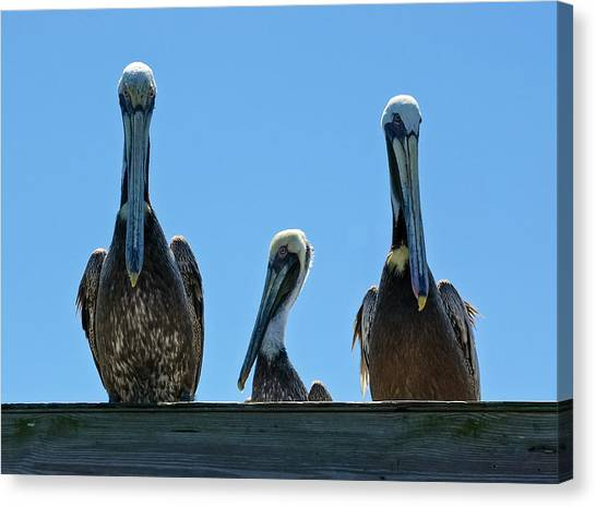 Pelicans At The Kure Beach Fishing Pier 2006 Canvas Print