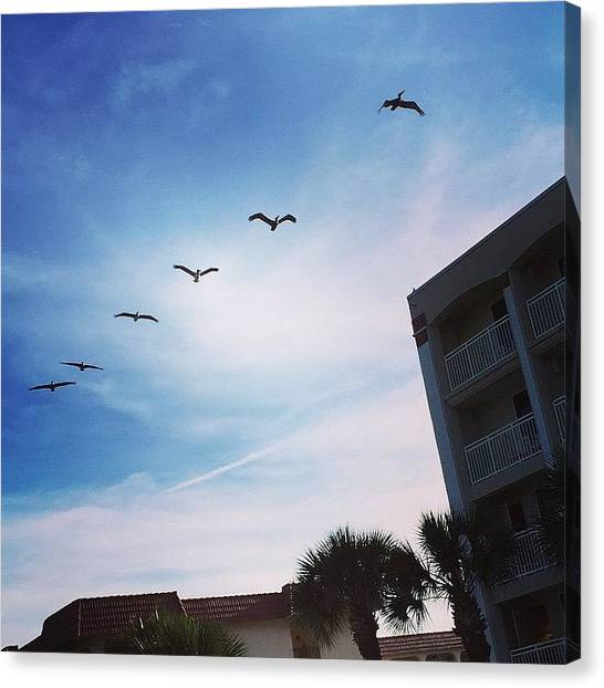 Florida Canvas Print - Pelicans! #florida #saintaugustine by Tammy Wetzel