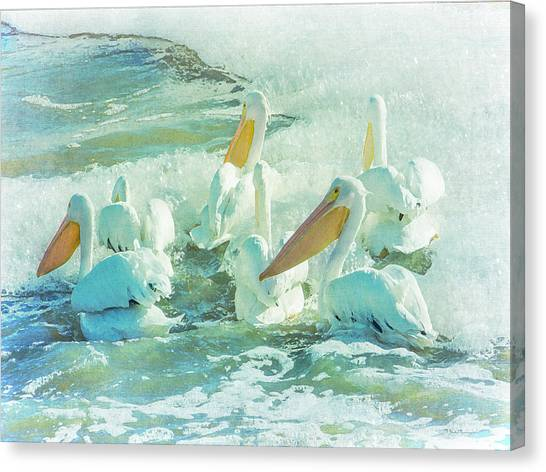 Pelicans On The Tide Canvas Print