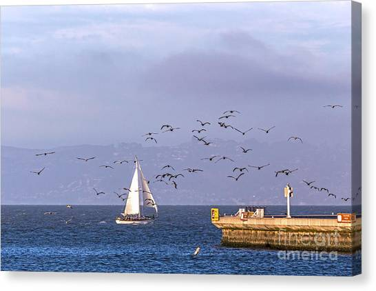 Canvas Print featuring the photograph Pelicans Pelicans by Kate Brown