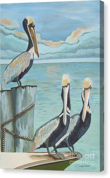 Pelicans Three Canvas Print by Jennifer  Donald