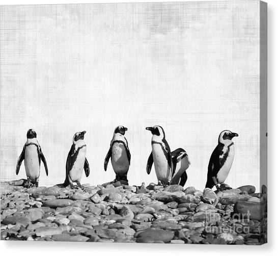 Penguins Canvas Print - Penguins by Delphimages Photo Creations