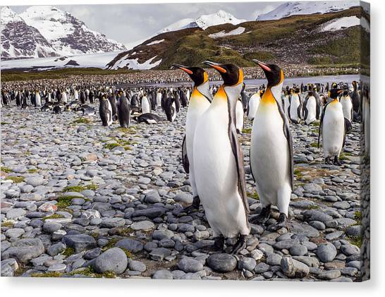 Penguins Canvas Print - Penguins Of Salisbury Plain by Karen Lunney