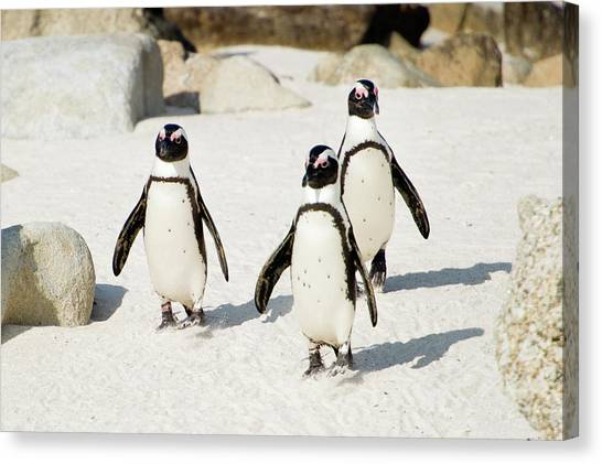 People Walking On Beach Canvas Print - Penguins On Beach by Rebecca Yale