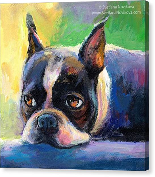 Dogs Canvas Print - Pensive Boston Terrier Painting By by Svetlana Novikova