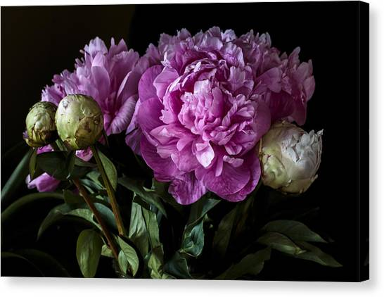 Peonies Still Life Canvas Print