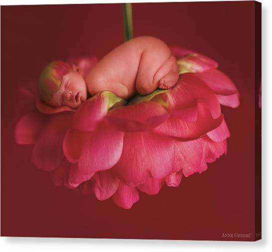 Peony Canvas Print - Chelsea On A Pink Peony by Anne Geddes