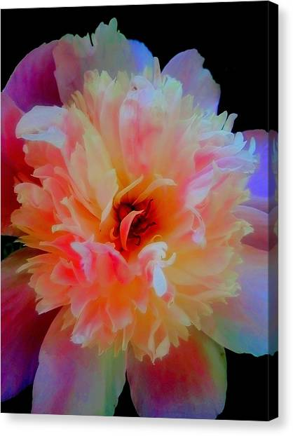 Peony Color Play Canvas Print