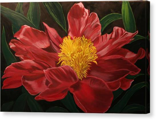 Peony Japonica Canvas Print by Robert Tower