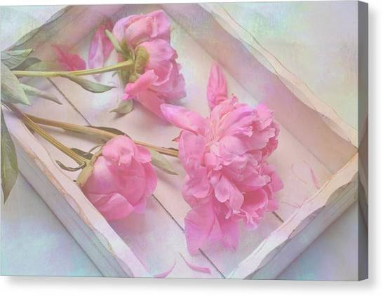 Peonies In White Box Canvas Print
