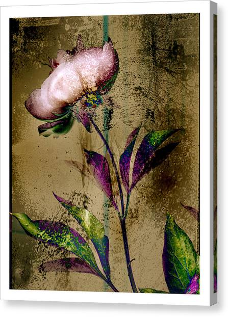 Peony Redux Canvas Print by Geoff Ault
