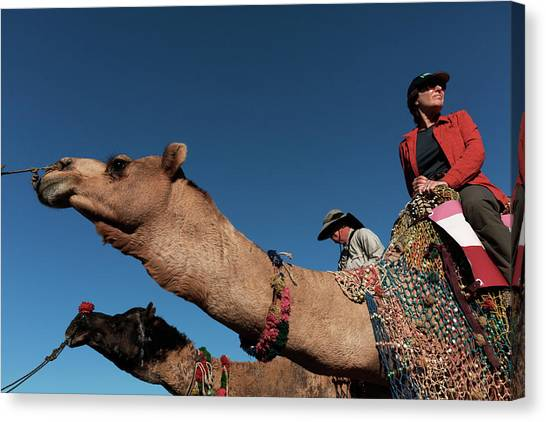 People On The Camel, Pushkar Canvas Print