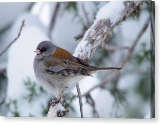 Little Things Canvas Print - Perched And Pretty by Jeff Swan
