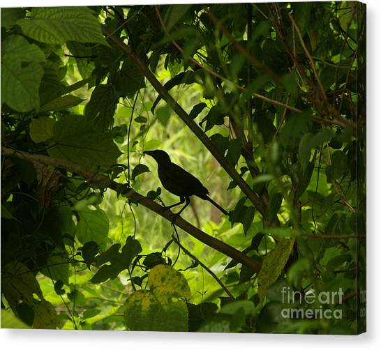 Perched In Green  Canvas Print