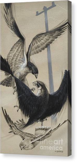Falcons Canvas Print - Peregrine Falcon And Kestrel by David Nockels