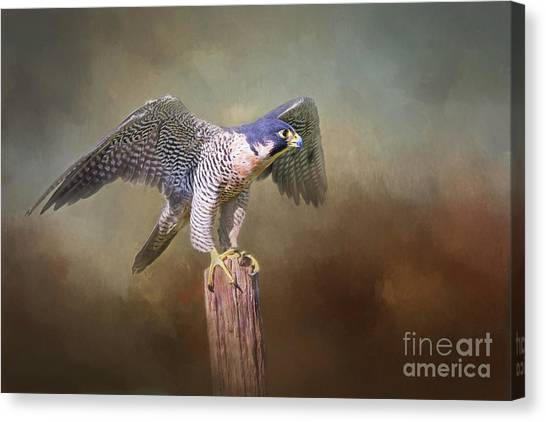 Peregrine Falcon Taking Flight Canvas Print
