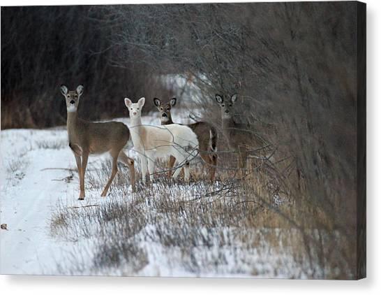 Perfect Blend Canvas Print