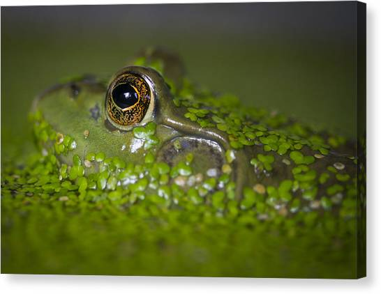 Perfect Camouflaging Canvas Print