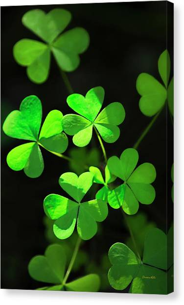 Patrick Canvas Print - Perfect Green Shamrock Clovers by Christina Rollo