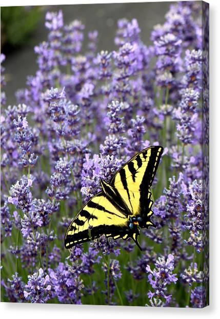 Perfect Imperfection Canvas Print