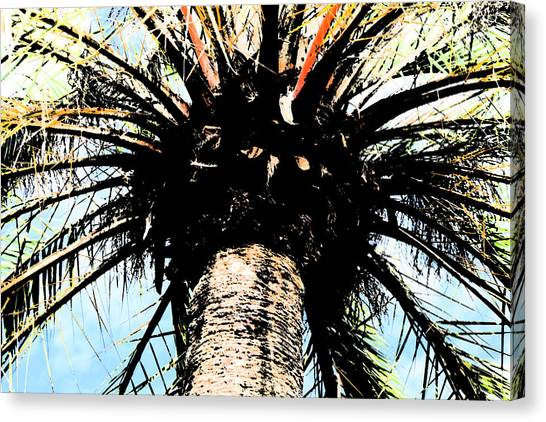 Perfect Palm Canvas Print by Nanette Hert