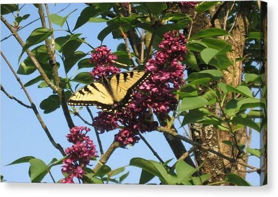 Yellow Swallowtail And Lilac Canvas Print